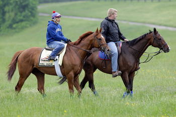 Animal Kingdom going for a ride on the Tuesday before the Preakness Stakes (G1).