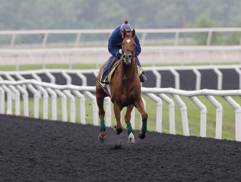 ELKTON, MD - MAY 17:  Exercise rider David Nava takes Kentucky Derby winner and Preakness entrant Animal Kingdom over the track at the Fair Hill Training Center on May 17, 2011 in Elkton, Maryland. Animal Kingdom is training for Saturday's 136th Preakness