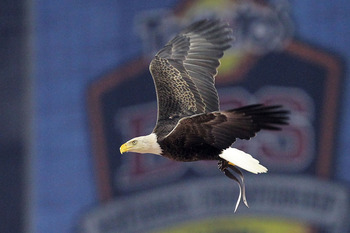 GLENDALE, AZ - JANUARY 10:  Challenger, a Bald Eagle circles the stadium during the national anthem for the Tostitos BCS National Championship Game between the Oregon Ducks and Auburn Tigers at University of Phoenix Stadium on January 10, 2011 in Glendale