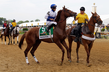 BALTIMORE, MD - MAY 21:  Shackleford #5 with jockey Jesus Castanon aboard  during the post parade before the start of the Preakness Stakes at Pimlico Race Course on May 21, 2011 in Baltimore, Maryland.  (Photo by Rob Carr/Getty Images)