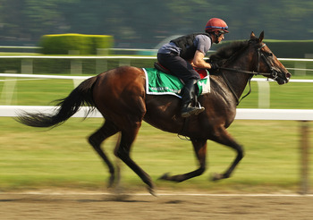 ELMONT, NY - JUNE 09:  Master of Hounds, with exercise rider Pat Lillis up, gallops on the track during a morning training session in preparation for The Belmont Stakes at Belmont Park on June 9, 2011 in Elmont, New York.  (Photo by Al Bello/Getty Images)