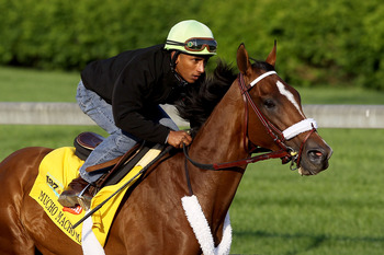 LOUISVILLE, KY - APRIL 30:  Mucho Macho Man runs during the morning exercise session in preparation for the 137th Kentucky Derby at Churchill Downs on April 30, 2011 in Louisville, Kentucky.  (Photo by Matthew Stockman/Getty Images)