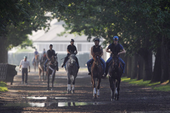 ELMONT, NY - JUNE 10:  Horses are walked to the track for a morning training session at Belmont Park on June 10, 2011 in Elmont, New York. The 143rd running of The Belmont Stakes will be run Saturday.  (Photo by Rob Carr/Getty Images)