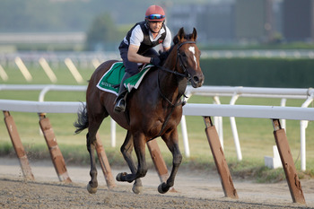 ELMONT, NY - JUNE 10:  Exercise rider Pat Lillis takes Master of Hounds for a morning training session in preparation for the 143rd running of The Belmont Stakes at Belmont Park on June 10, 2011 in Elmont, New York.  (Photo by Rob Carr/Getty Images)