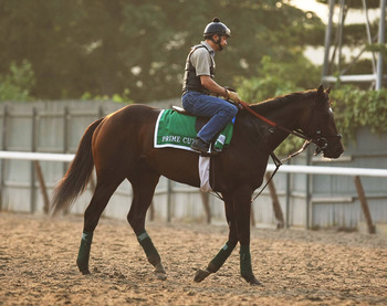 ELMONT, NY - JUNE 09:  Exercise rider Dane Noel rides Prime Cut during a morning training session in preparation for The Belmont Stakes at Belmont Park on June 9, 2011 in Elmont, New York.  (Photo by Al Bello/Getty Images)