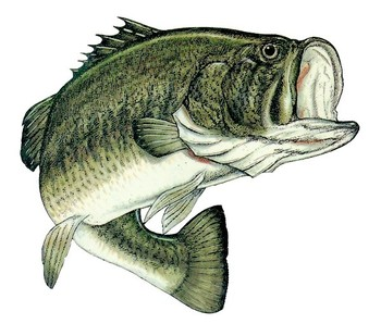 Largemouth600x530_display_image