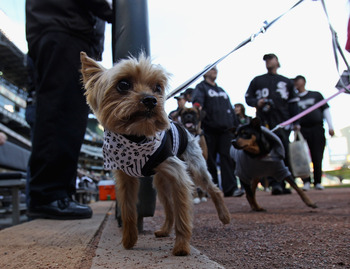 CHICAGO, IL - MAY 17: Fans walk their dogs around the warning track during the annual 'Dog Day' promotion before the Chicago White Sox take on the Texas Rangers at U.S. Cellular Field on May 17, 2011 in Chicago, Illinois. (Photo by Jonathan Daniel/Getty I