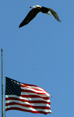 SAN DIEGO, CA -  SEPTEMBER 11:   A bald eagle flies past an American Flag before the start of the San DIego Chargers and the Dallas Cowboys NFL Game on September 11, 2005 at Qualcomm Stadium in San Diego, California. (Photo by Donald Miralle/Getty Images)