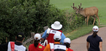 COLORADO SPRINGS, CO - JULY 10:  The threesome of So Yeon Ryu (R), Eun-Hee Ji (C) and Sun Young Yoo (L) all of Korea, and their caddies encounter a deer as they leave the 10th tee box during the final round of the U.S. Women's Open at The Broadmoor on Jul