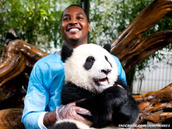 Sorry Mr. Panda, but your friend Carmelo won't be playing basketball in China next season.