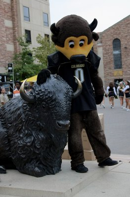 BOULDER, CO - OCTOBER 04:  'Chip' the Colorado Buffaloes mascot checks in with the Buffaloe statue as he enter the stadium prior to facing he Texas Longhorns at Folsom Field on October 4, 2008 in Boulder, Colorado. Texas defeated Colorado 38-14.  (Photo b