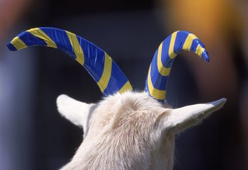 14 Oct 2000: A view of the Navy Midshipmen Macot as the goat horns are wrapped in tape in the school colors during the game against the  Notre Dame Fighting Irish  at the Citrus Bowl in Orlando, Florida. The Fighting Irish defeated the Midshipmen 41-14. M