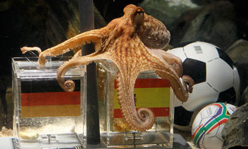 Paul-the-psychic-octopus-006_display_image