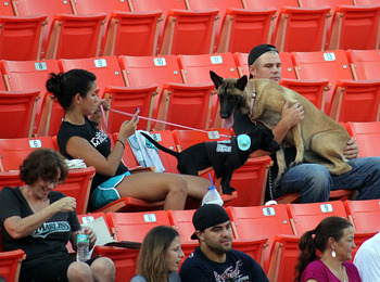 MIAMI GARDENS, FL - AUGUST 12:  Dogs attend the game during 'bark at the Park' night as the San Francisco Giants take on the Florida Marlins at Sun Life Stadium on August 12, 2011 in Miami Gardens, Florida.  (Photo by Marc Serota/Getty Images)