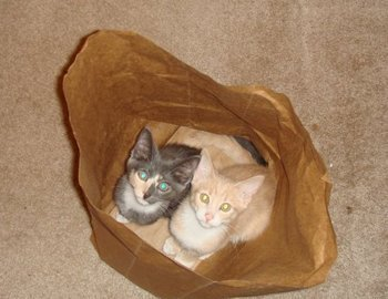 Evyerone loves kittens in a paper bag