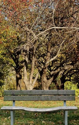 Bench_display_image