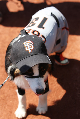 SAN FRANCISCO, CA - AUGUST 28:  <<enter caption here>> at AT&T Park SAN FRANCISCO, CA - AUGUST 28:  A dog walks on the field during the dog parade wearing a Cody Ross #13 of the San Francisco Giants (not pictured) jersey before the game between the Housto