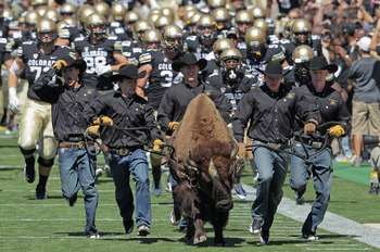 BOULDER, CO - SEPTEMBER 10:  Colorado Buffaloes mascot Ralphie escorts the team on to the field as they face the California Golden Bears at Folsom Field on September 10, 2011 in Boulder, Colorado.  (Photo by Doug Pensinger/Getty Images)