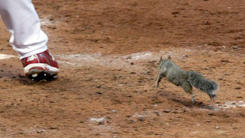 Rallysquirrel_display_image