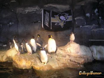 Pittsburghzoo_display_image