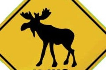 Moose_display_image