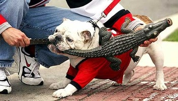 Uga_versus_gator_display_image
