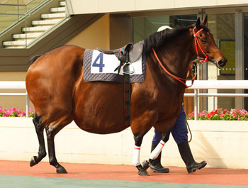 Race-horse-r_display_image