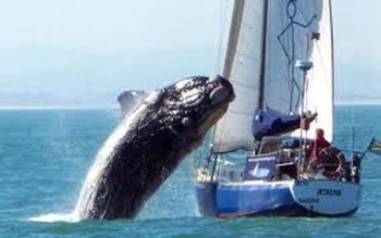 Whale_display_image