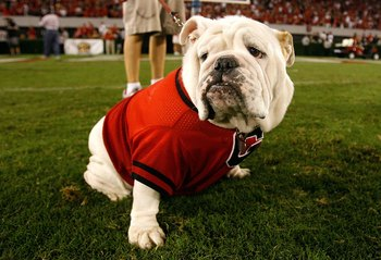 ATHENS, GA - SEPTEMBER 12:  UGA VII, mascot of the Georgia Bulldogs, against the South Carolina Gamecocks at Sanford Stadium on September 12, 2009 in Athens, Georgia.  (Photo by Kevin C. Cox/Getty Images)