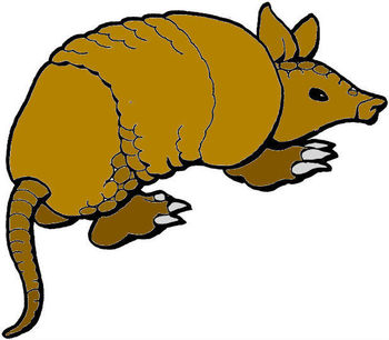 Armadillo_display_image