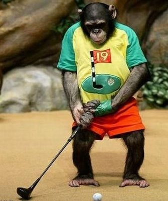 Funny-animals-chimp-playing-golf_display_image