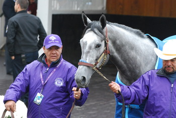 Creative Cause schooling in the paddock Breeders' Cup Friday Photo: Melissa Bauer-Herzog