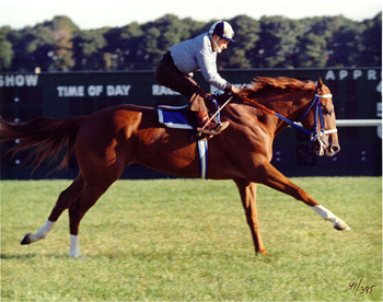 http://www.best-horse-photos.com/images/Secretariat%20Horse%20Photo.jpg