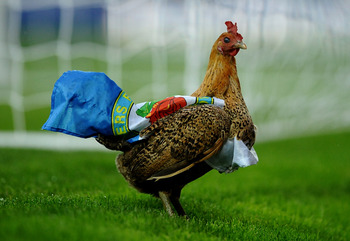 The Blackburn Chicken shows his colors