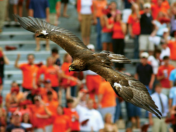 Eagle_display_image