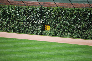 Ivywrigleyfield_display_image