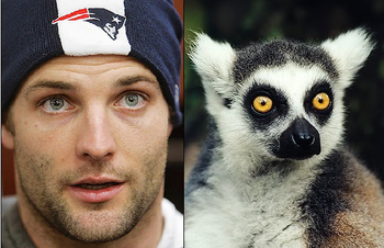 Images via the AP and The Lemur Blog