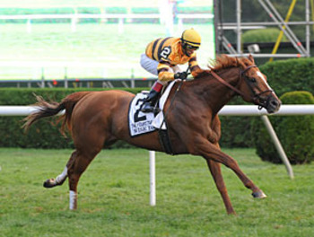 Wise Dan (image via bloodhorse.com)
