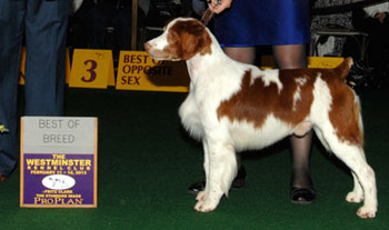 Westminster Dog Show 2013 Results: Best of Breed Winners ...
