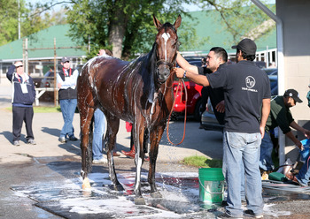 Bath time for Goldencents
