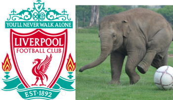 Liverpoolelephant_display_image