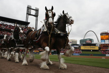 ST. LOUIS, MISSOURI - APRIL 6: The Budweiser Clydesdales make their way around Busch Stadium prior to the St. Louis Cardinals playing against the Pittsburgh Pirates during opening day at Busch Stadium April 6, 2009 in St. Louis, Missouri.  (Photo by Dilip