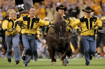 DENVER - AUGUST 31:  Ralphie IV, mascot for the University of Colorado Buffaloes is brought onto the field before they face  the Colorado State University Rams at Invesco Field at Mile High on August 31, 2008 in Denver, Colorado.  (Photo by Doug Pensinger