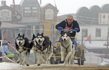 HASSELFELDE, GERMANY - JANUARY 07:  Mike Blaszynski drives with Siberian Huskies during the 6th International Dog Sled Racing Competition January 7, 2006 in Hasselfelde, Germany. The competition includes around 74 starters in 8 different categories and co
