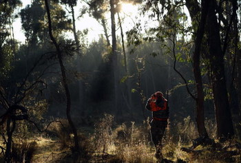 BLACK SPRINGS, AUSTRALIA - MAY 10:  Andrew Moriarty searches the bush with binoculars during a hunt in the Vulcan State Forest on May 10, 2009 in Black Springs, Australia. Voluntary conservation hunting takes place on public and private land under the Gam