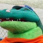 Gator Fan