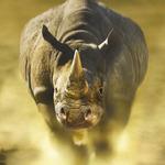 Whino -