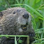 Dan Beaver