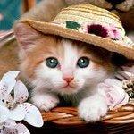 Magdy Whitecat