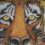 Tiger  Eyez